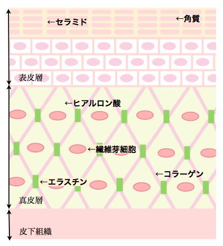 健康カラダ☆  綺麗な肌の秘訣とは?