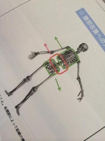 腰痛アプローチ編&RRR股関節アプローチ復習会