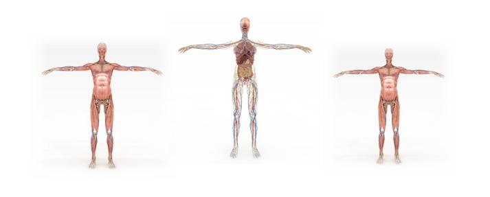 【身体の本質からみた基礎生理学 in 沖縄】後編 ⑤〜⑩
