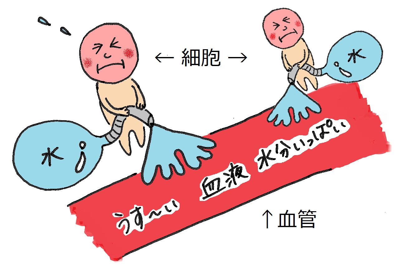 健康カラダ☆ ②生理痛 ~ むくみ・頭痛のしくみ ~
