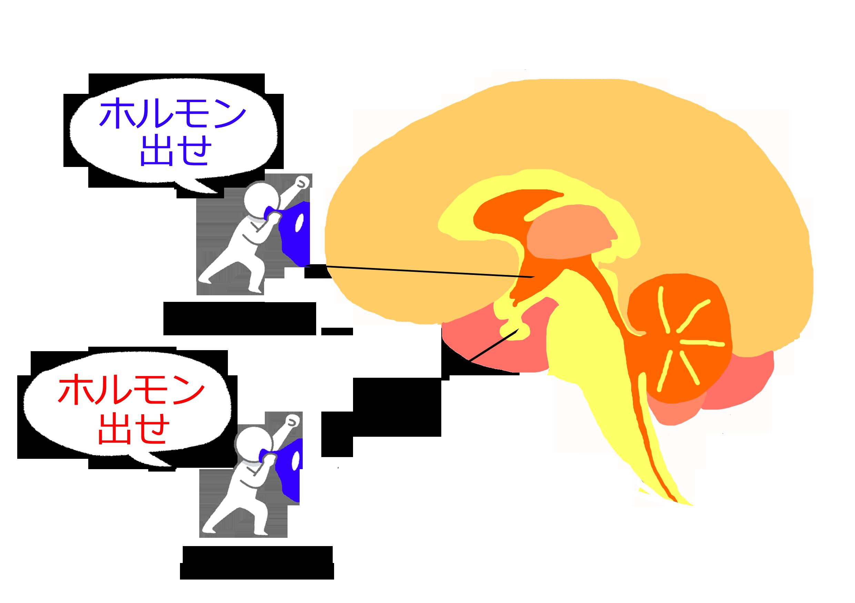 カラダ健康 ☆  妊娠について