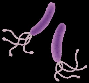 健康カラダ☆ 『 ピロリ菌と胃酸の関係① 』