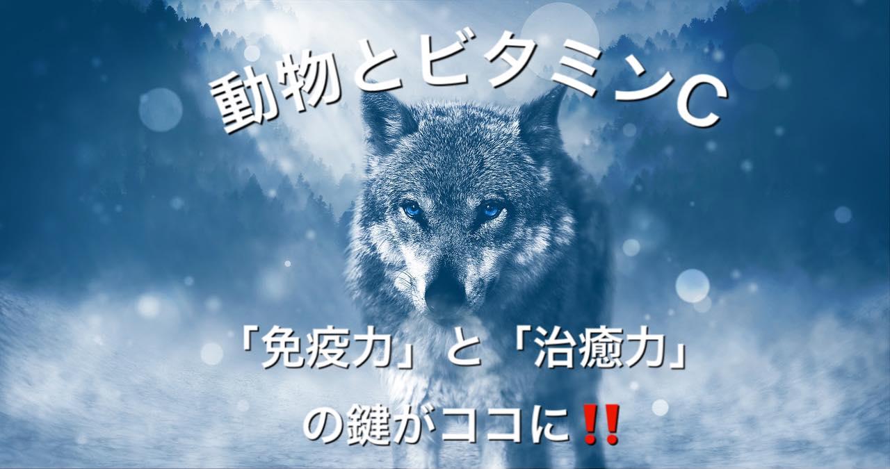 Ortho21☆『 動物とビタミンC 』